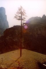 Der große Einzelkämpferbaum